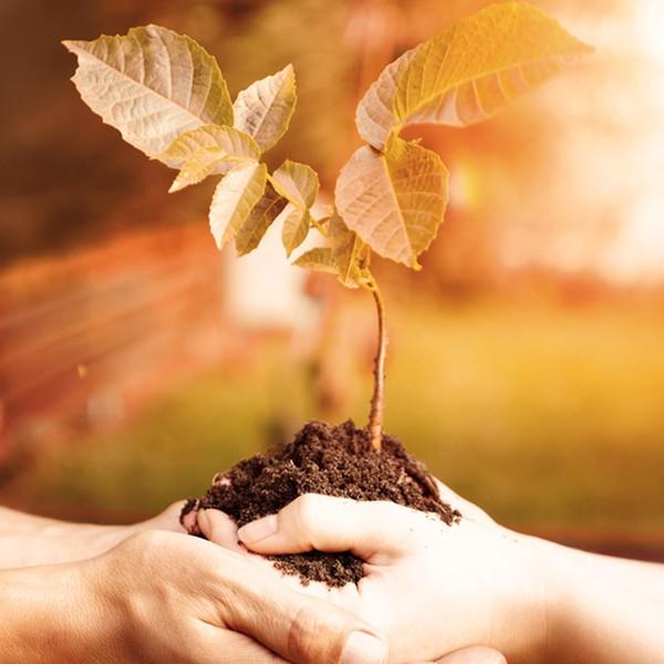 Baumpatenschaft (5 Jahre)